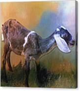 One Of God's Creatures Canvas Print