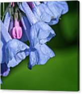One Pink Bell Canvas Print