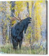 One Proud Bull Moose Canvas Print