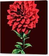 One Red Dahlia Canvas Print