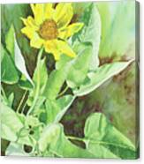 One Rooting In The Sun Canvas Print