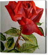One Single Red Rose Canvas Print