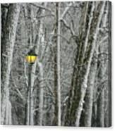 One Strange Tree 1 Canvas Print
