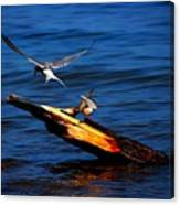 One Tern Flight Canvas Print