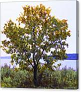 One Tree Hudson River View Canvas Print