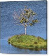 One Tree Island Canvas Print