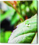 One Waterdrop Canvas Print
