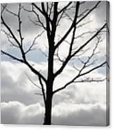 One Winter Tree With Clouds Canvas Print
