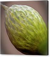 Onion Flower Macro Canvas Print