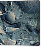 Onion Root Tip Cell, Freeze Fracture Tem Canvas Print