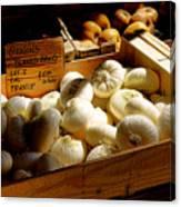 Onions Blancs Frais Canvas Print