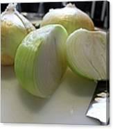 Onions I Canvas Print