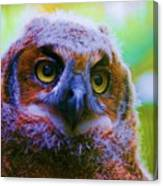 Opalescent Owl Canvas Print