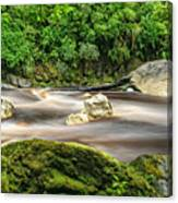 Oparara River Canvas Print