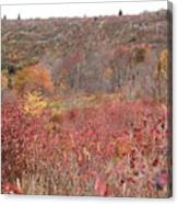 Open Field View Canvas Print