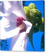 Open Hibiscus Flower With Deep Blue Sky Canvas Print