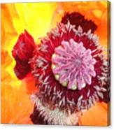 Open Poppy Canvas Print