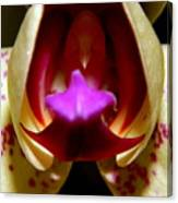 Open Wide - Orchid Macro Canvas Print