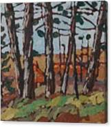 Opinicon November Forest Canvas Print