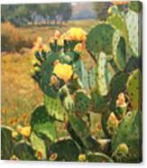 Opuntia In Bloom Canvas Print