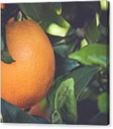 Orange #3 Canvas Print