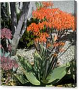 Orange And Pink Exotic Bell Flowers Canvas Print