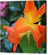 Orange And Yellow Canna Lily 2  Canvas Print