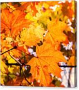 Fall Of Orange Leaves Canvas Print