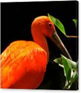 Orange Beauty Canvas Print