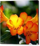 Orange Bells  Canvas Print