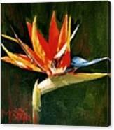 Orange Bird Of Paradise Canvas Print