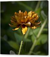 Orange Blanket Flower Canvas Print