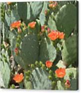 Orange Blossom Cactus  Canvas Print