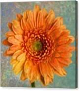 Orange Color Stroke Gerber Daisy Canvas Print