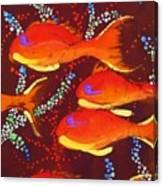 Orange Coral Reef Fish Canvas Print