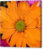 Orange Crush Daisy Canvas Print