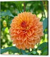 Orange Dahlia Master Gardeners Art Collection Baslee Troutman Canvas Print