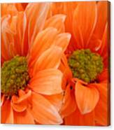 Orange Daisies Paired Canvas Print