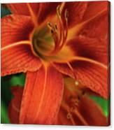 Orange Daylily Beauty Canvas Print