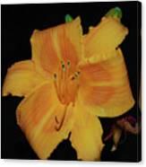 Orange Daylily Flower Blossom In A Garden Canvas Print