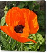Orange Delight Canvas Print