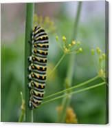 Orange Dot Caterpillar Canvas Print