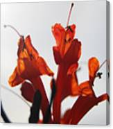 Orange Drama Canvas Print