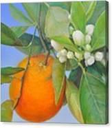 Orange en Bouton Canvas Print