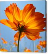 Orange Floral Summer Flower Art Print Daisy Type Blue Sky Baslee Troutman Canvas Print