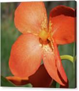 Orange Flower 1 Canvas Print