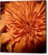 Orange Flower Enhanced 2016 Canvas Print