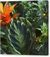 Orange Flower Longwood Gardens Canvas Print