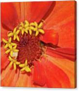 Orange Flower Macro Canvas Print