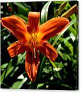 Orange Flower Of Summer Canvas Print